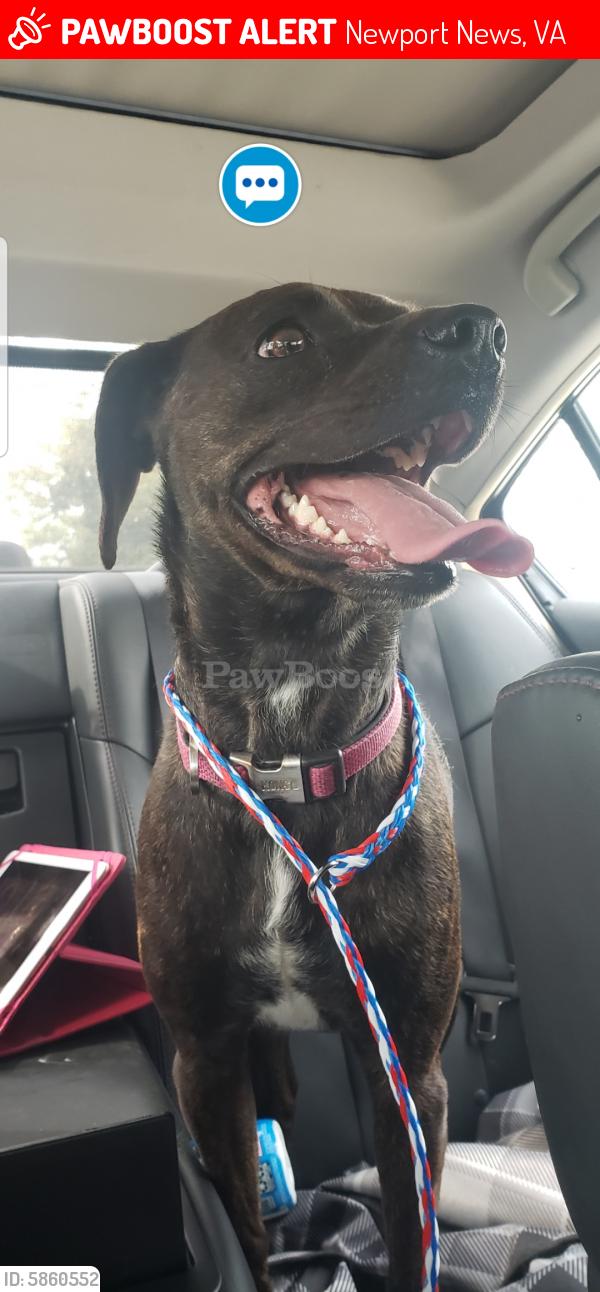 Lost Female Dog last seen Trailblazer Blvd and rodeo circle , Newport News, VA 23608