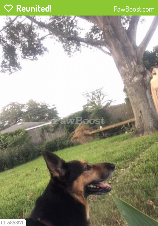 Reunited Male Dog last seen Hagar park, Houston, TX 77096