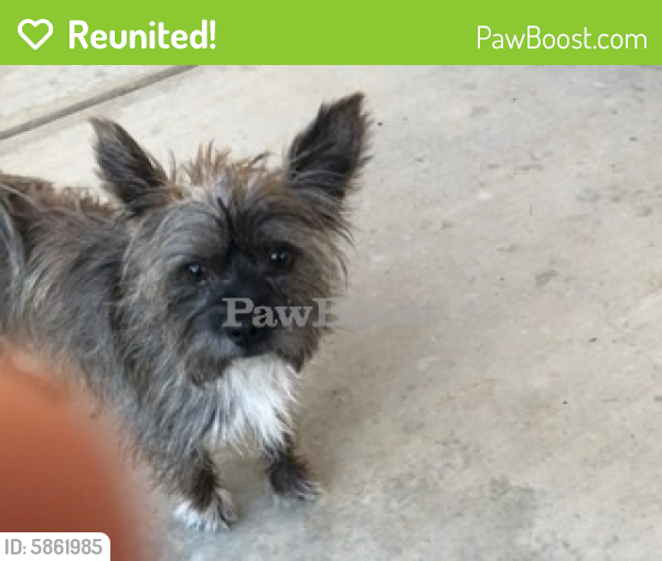 Reunited Male Dog last seen Invermay Bakersfield CA 93312 , Bakersfield, CA 93312