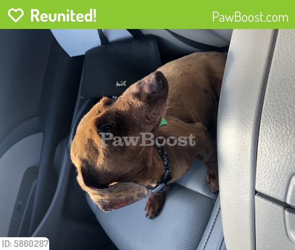 Reunited Male Dog last seen Colony pines , Newport News, VA 23608
