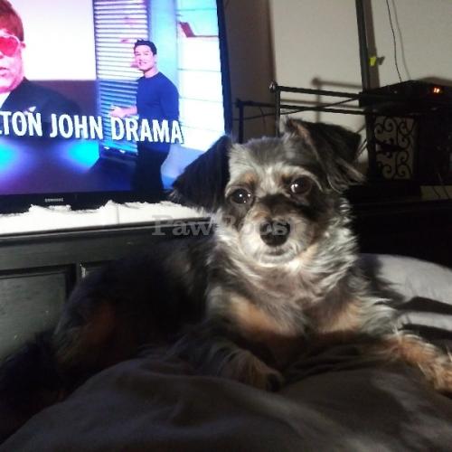 Lost Female Dog last seen 5th crocker sts, Los Angeles, CA 90013