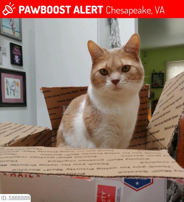Lost Female Cat last seen Shepherds Gate, Logan's Mill, Chesapeake, VA 23320