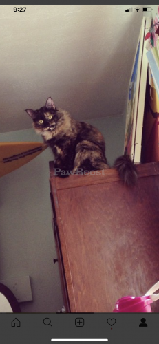Lost Female Cat last seen Hidenwood Elementary School , Newport News, VA 23606
