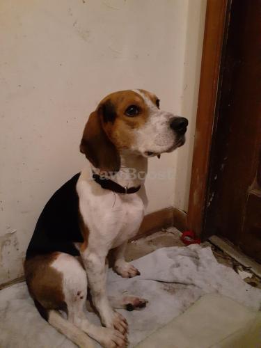 Found/Stray Male Dog last seen Bainbridge & Mayfield, Chesapeake, VA 23320