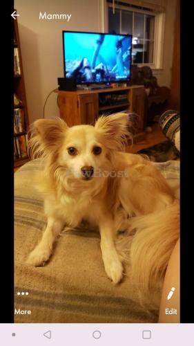 Lost Male Dog last seen Bunting lane and martha court, Poquoson, VA 23662
