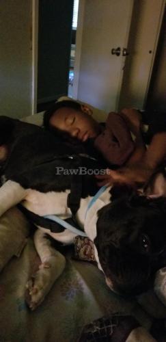 Lost Female Dog last seen Stoney brook estates, Newport News, VA 23608