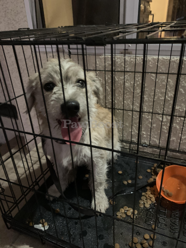 Found/Stray Unknown Dog last seen Michael Hunt and Leafdale, South El Monte, CA 91733