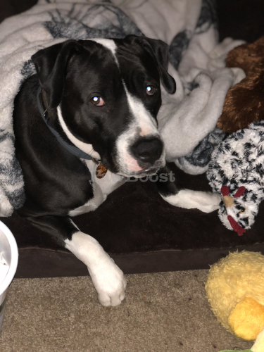 Lost Male Dog last seen Westwinds Apartments's , Portsmouth, VA 23703