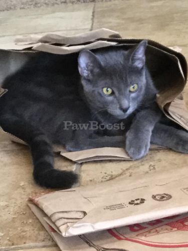 Lost Male Cat last seen Camino vista , Anaheim, CA 92807