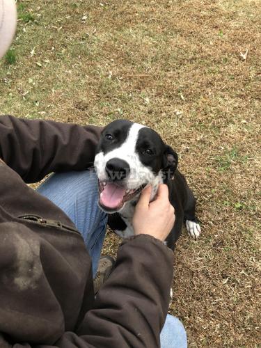 Found/Stray Male Dog last seen 76th and Roanoke , Newport News, VA 23605