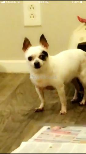 Lost Female Dog last seen Young Terrace at Virginia Beach blvd , Norfolk, VA 23510
