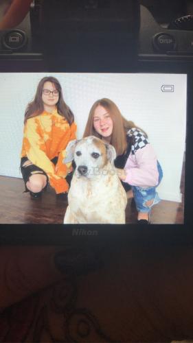 Lost Male Dog last seen Near pattie lane , Virginia Beach, VA 23464