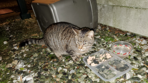 Found/Stray Unknown Cat last seen Forrest St and Pine Grove Ave, Hampton, VA 23669