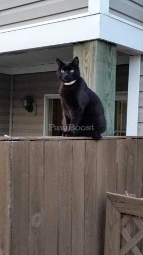 Lost Female Cat last seen Great Bridge Boulevard 23320, Chesapeake, VA 23320