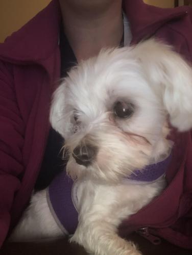 Found/Stray Female Dog last seen Knells ridge Blvd , Chesapeake, VA 23320