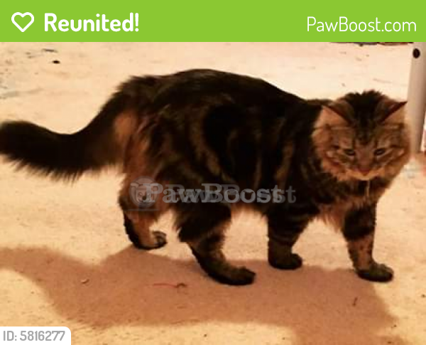 Reunited Female Cat last seen Inchon Rd on Joint Forces Staff College base housing, Norfolk, VA 23511