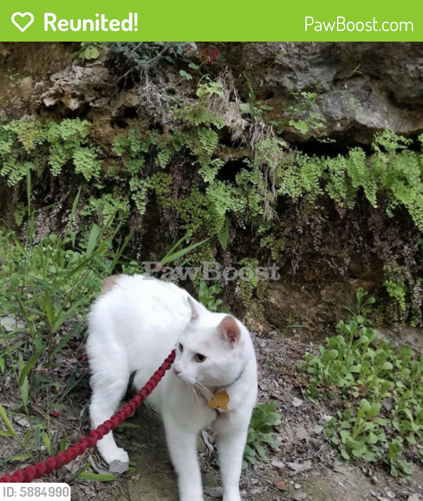 Reunited Male Cat last seen McConnell and Summer, Memphis, TN 38112