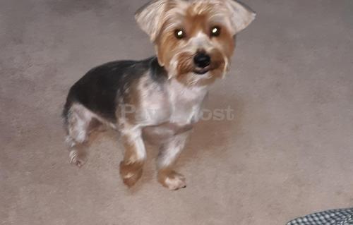 Lost Male Dog last seen Holland Rd and Windsor Oaks Blvd , Virginia Beach, VA 23453