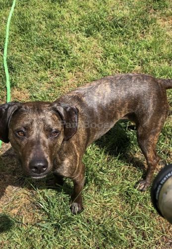 Lost Female Dog last seen Meadow  Lost in Salem middle school area gravenhurst/Eddystone/ thamesford area, Virginia Beach, VA 23451
