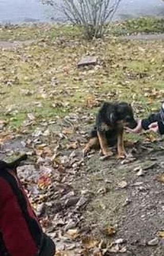 Found/Stray Unknown Dog last seen Camelot, Chesapeake, VA 23323