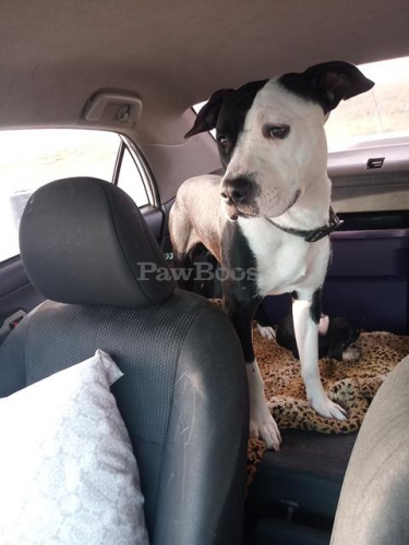 Lost Male Dog last seen Diligence, powerlines behind motel 6 on j clyde, Newport News, VA 23601