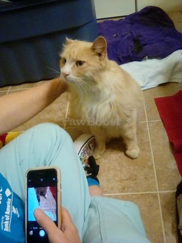 Found/Stray Male Cat last seen Military Highway , Norfolk, VA 23502