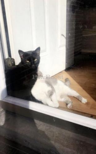 Lost Male Cat last seen modoc ave norfolk va , Norfolk, VA 23503