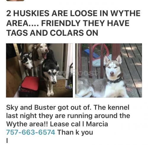 Lost Female Dog last seen Near th , Newport News, VA 23607