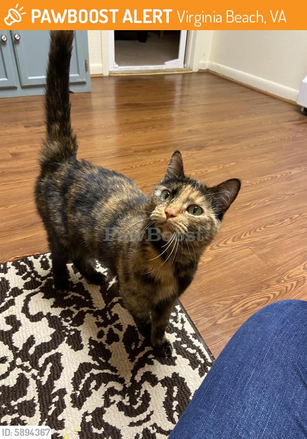 Found/Stray Female Cat last seen Gafney Lane, Virginia Beach, VA 23455