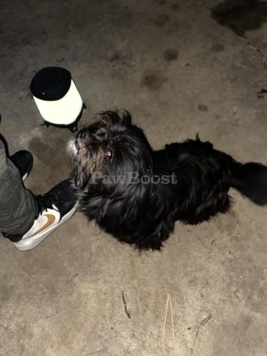 Found/Stray Unknown Dog last seen King George Rd near Hinsdale, Virginia Beach, VA 23462