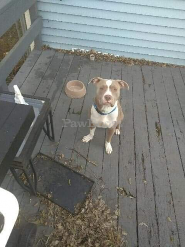 Lost Male Dog last seen Lasalle and kecoughton, Hampton, VA 23669