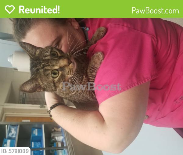Reunited Male Cat last seen Argonne ave & Cromwell drive, Norfolk, VA 23509