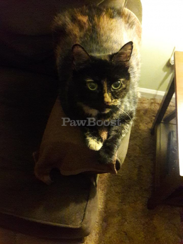 Lost Female Cat last seen Armistead Ave , Hampton, VA 23669
