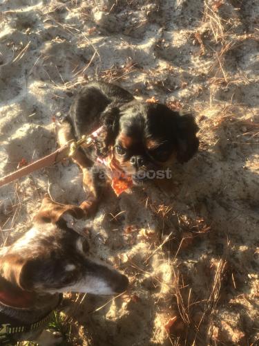 Lost Female Dog last seen Near Tipton rd , Newport News, VA 23606