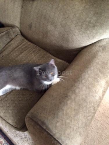 Lost Male Cat last seen Near block Rodgers street. Chesapeake va, Chesapeake, VA 23324