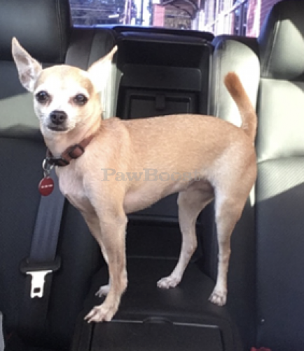Lost Female Dog last seen Near Shoal Creek Blvd, Austin TX 78756, Austin, TX 78756