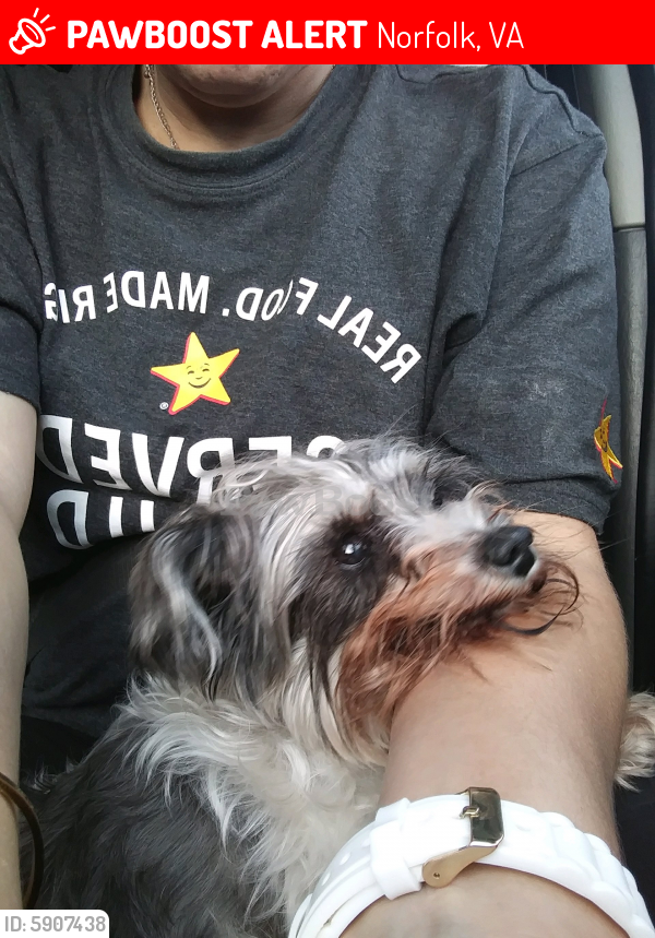 Lost Female Dog last seen Chapin st \ tidewater dr, Norfolk, VA 23503