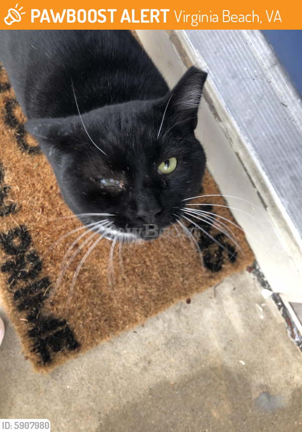 Found/Stray Unknown Cat last seen Boxford and Grafton ct, Virginia Beach, VA 23456