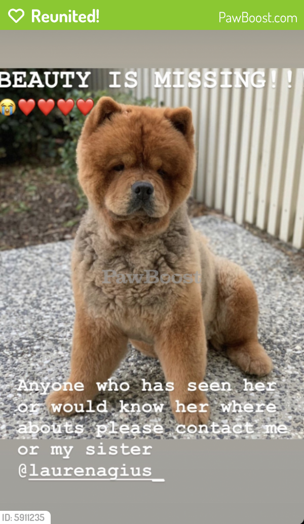 Reunited Female Dog last seen New Farm Brisbane , New Farm, QLD 4005