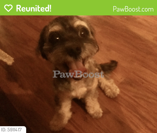 Reunited Male Dog last seen Arbor Park Complex at Arroyo Park Drive & McBean Parkway, , Cleveland, OH 44115