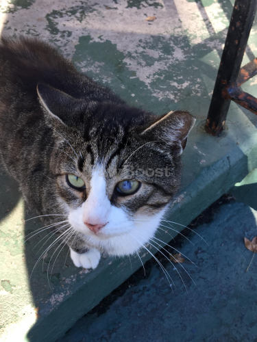 Found/Stray Male Cat last seen Two blocks in from Cromwell Rd, Norfolk, VA 23509