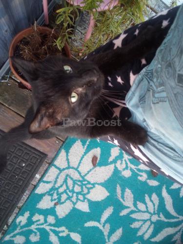 Lost Male Cat last seen Widgeon Court and Snow Goose, Chesapeake, VA 23320