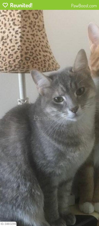 Reunited Female Cat last seen Brandon Ave., Norfolk, VA 23510