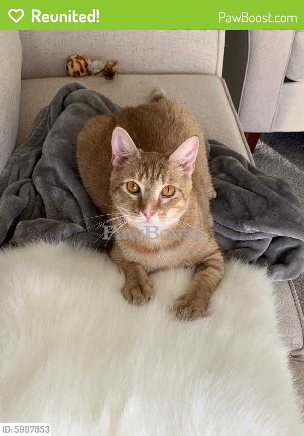 Reunited Male Cat last seen Park 216 apartments , Suffolk, VA 23433