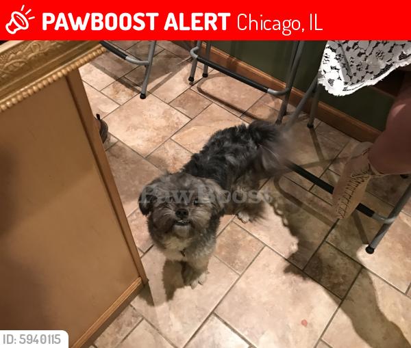 Lost Male Dog last seen Egglestone , Chicago, IL 60621