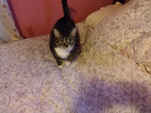 Found/Stray Female Cat last seen Elliott and maupin, Portsmouth, VA 23702