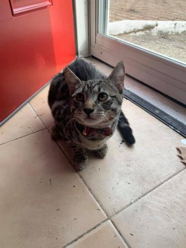 Lost Male Cat last seen Columbia ave and 8th Street , North Bergen, NJ 07302