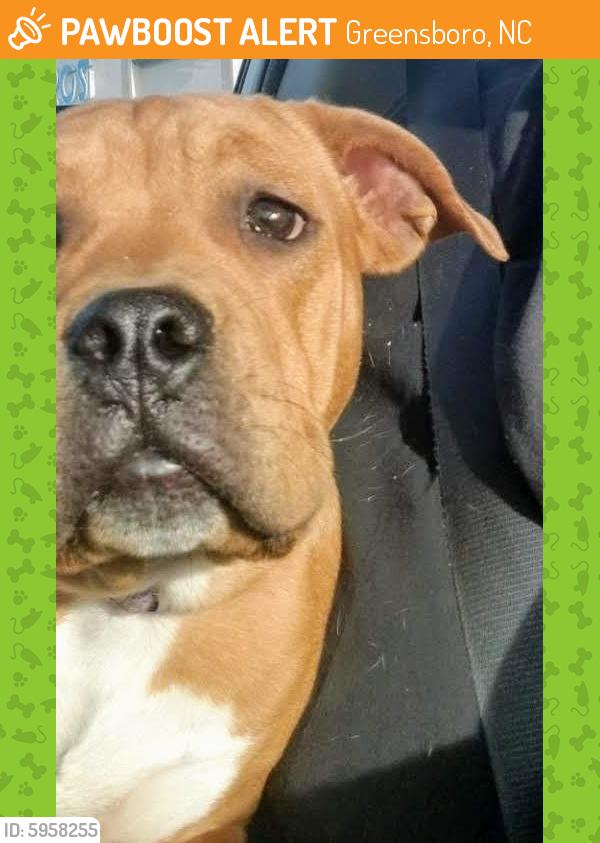 Surrendered Dog in Greensboro, NC 27403 (ID: 5958255 ...