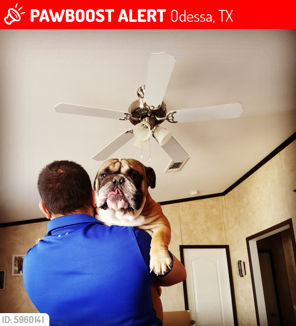 Lost Male Dog in Odessa, TX 79764 Named Bongo (ID: 5960141 ...
