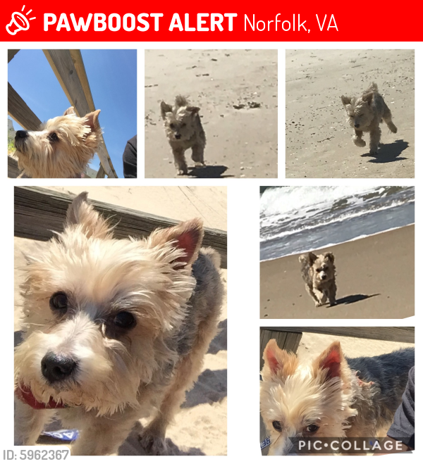 Lost Male Dog last seen Argonne Ave & Shoop Ave, Norfolk, VA 23509